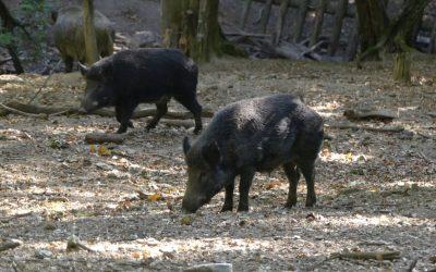 Purkersdorf: Mit allen Sinnen Natur erleben