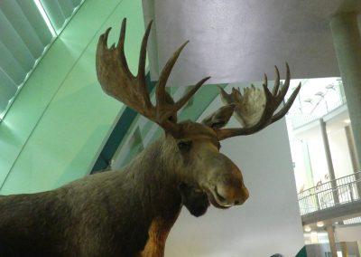 museum_007
