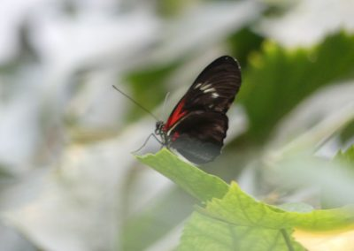 schmetterling07