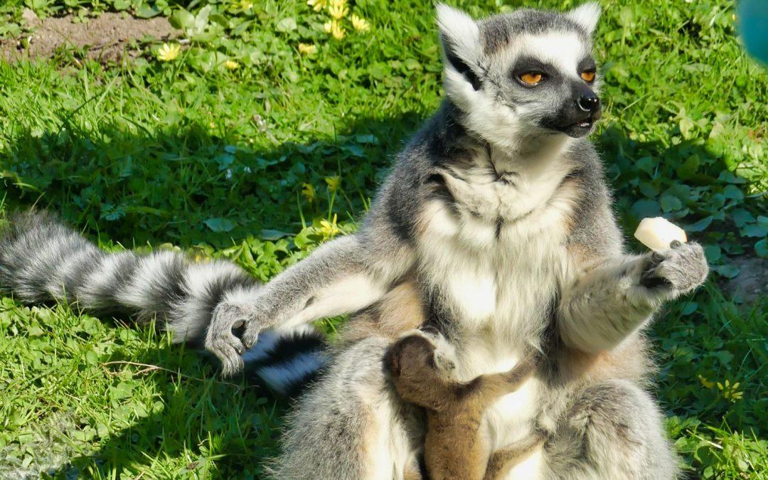 Mecklenburger Tierparkkultur