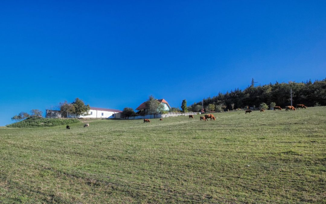 Von Egelsee zur Weiglwarte – die weniger bekannten Seiten von Krems und Dürnstein