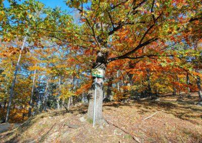 Weg zum Toten Berg bei Rossatzbach