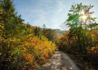 Weg vom Toten Berg bei Rossatzbach