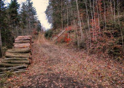 Querung Forstweg