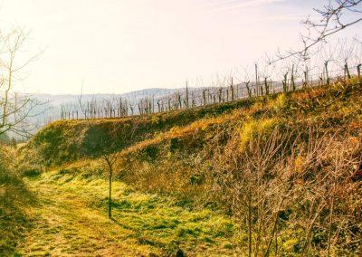 Weg Richtung Rothenhof
