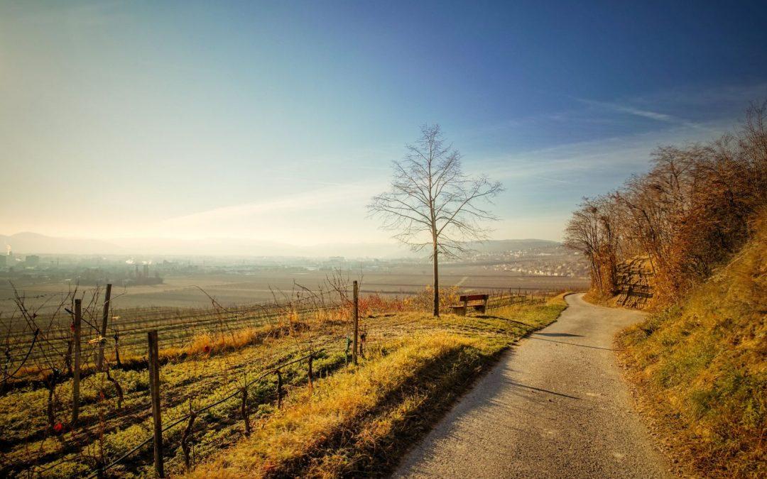 """tut gut"" Wanderweg Rohrendorf – Route 2"