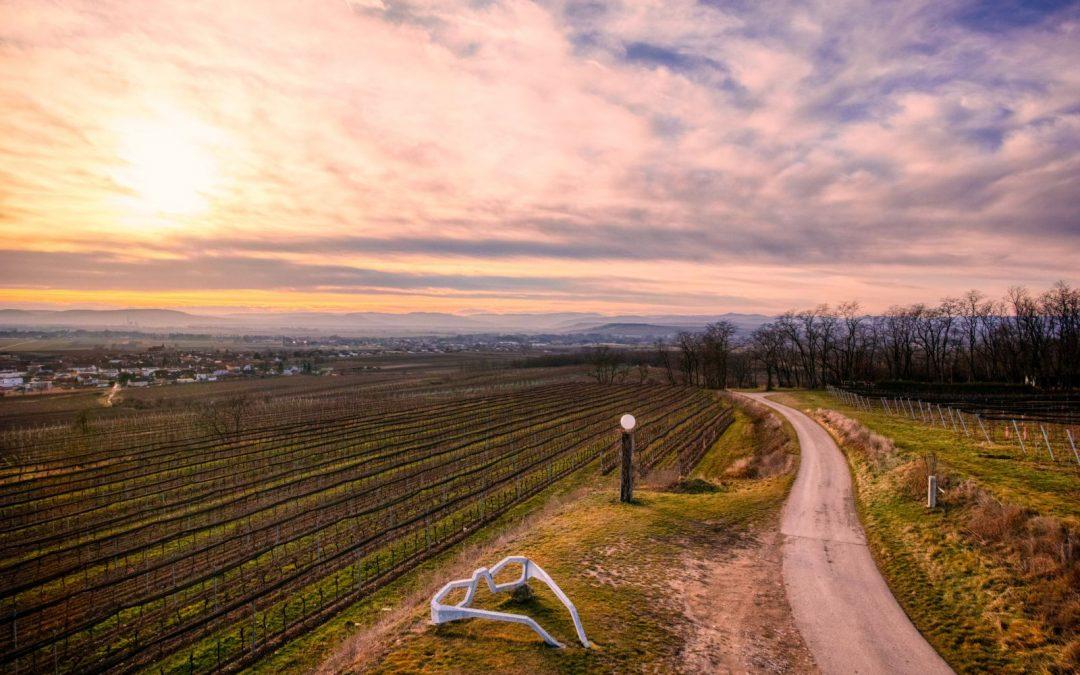 """""""tut gut"""" Wanderweg Grafenegg – Route 3: Durch die Weinberge zur Engabrunner Warte"""