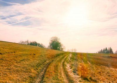 Weg zum Halterberg