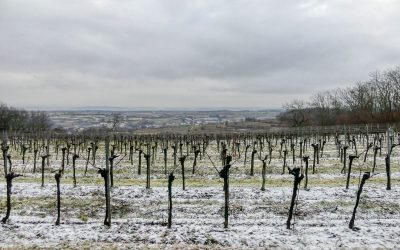 Die Spiesberg-Wanderung in Lengenfeld